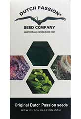 Snow Bud - Dutch Passion - 3 feminisierte Hanfsamen