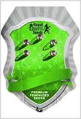 Royal Creamatic 100% (5) bei Samenwahl sicher online bestellen und kaufen