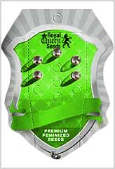 Royal Critical Auto 100% (5) bei Samenwahl sicher online bestellen und kaufen