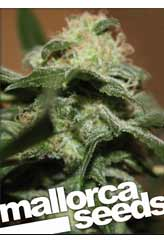 Comprar Mallorca Haze 100% (5) en Hipersemillas