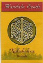 Kalichakra order at Hipersemillas
