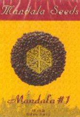 Mandala #1 - Mandala Seeds - регулярные семена конопли