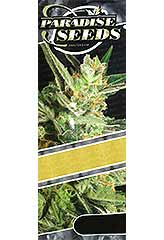 Mendocino Skunk 100% (3) order at Hipersemillas