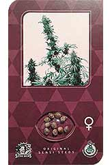 Northern Lights - Sensi Seeds - feminisierte Hanfsamen