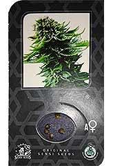 Sensi Skunk  AUTO - Sensi Seeds - 5 feminisierte Hanfsamen