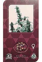 Super Skunk - Sensi Seeds - (10) феминизированные семена конопли