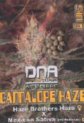 Cannalope Haze Reg. (6) order at Hipersemillas