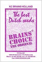 Comprar Brains Choice (5) en Hipersemillas