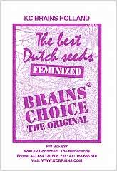 Comprar Brains Choice 100% en Hipersemillas