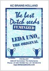 Leda Uno 100% bei Samenwahl sicher online bestellen und kaufen