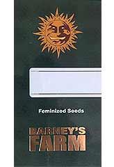 Peppermint Kush 100% (10) bei Samenwahl sicher online bestellen und kaufen