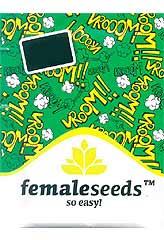 White Widow x Big Bud 100% (10) bei Samenwahl sicher online bestellen und kaufen