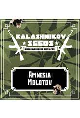 Amnesia Molotov 100% (5) order at Hipersemillas