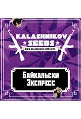 Baikal Express 100% (5) bei Samenwahl sicher online bestellen und kaufen