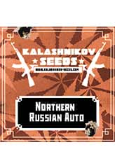 Northern Russian AUTO 100% (3) order at Hipersemillas