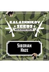 Siberian Haze 100% (5) order at Hipersemillas