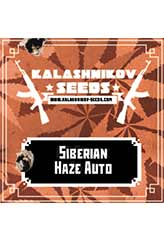 Siberian Haze AUTO 100% (5) order at Hipersemillas