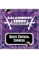 White Critical Express 100% (5) order at Hipersemillas