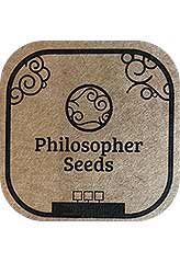 Key Lime Pie x Do-Si-Dos 100% (5) order at Hipersemillas