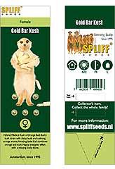 Comprar Gold Bar Kush 100% (5) en Hipersemillas