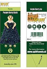 Comprar Purple Berry Kush 100% (3) en Hipersemillas