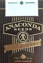 Hypnotic 100% (5) bei Samenwahl sicher online bestellen und kaufen