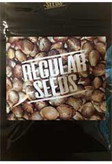 Cacao Kush bei Samenwahl sicher online bestellen und kaufen