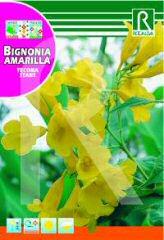 Yellow Bignonia заказать и купить на supersemena.com