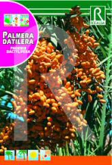 Date Palm order at Hipersemillas