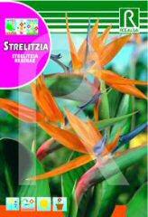 Strelizia (Bird of Paradise) order at Hipersemillas