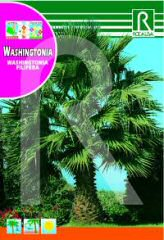 Washingtonia order at Hipersemillas