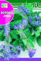Borage order at Hipersemillas