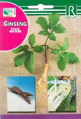 Ginseng bei Samenwahl sicher online bestellen und kaufen