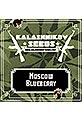 Moscow Blueberry 100% (5)