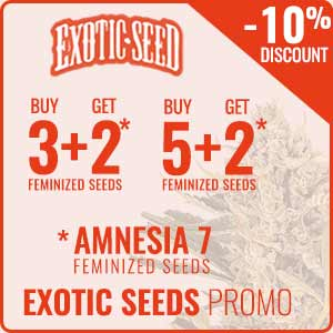 Promotion Exotic Seeds