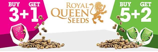 Promotion Royal Queen Seeds