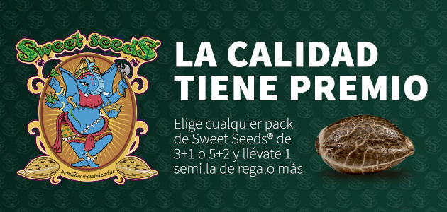 Promotion Sweet Seeds