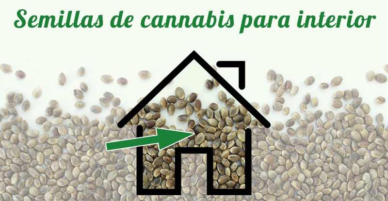 Comprar semillas de cannabis para interior - Semillas de interior ...